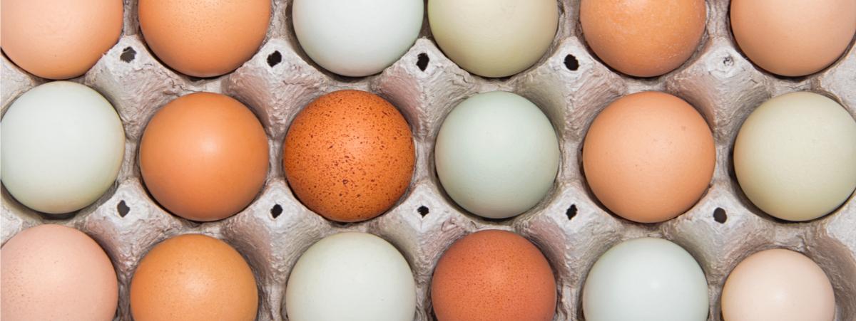 colore-tuorlo-delle-uova.jpg